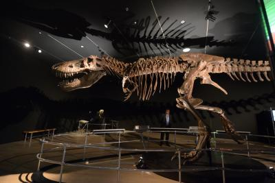 What led to dinosaurs' extinction?