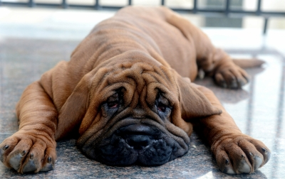 Love to work with animals? It may up depression risk