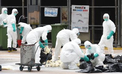 Vietnam culls poultry in large numbers amid bird flu spread
