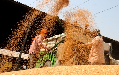 Foodgrain production to be record 279.51 million tonne: Government (Lead)
