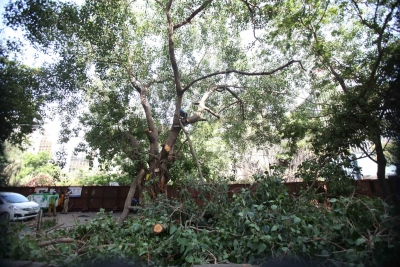 Cop threatens activist for questioning tree felling in K'taka