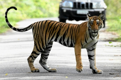 Dibang Valley to be highest site for 2018 tiger census