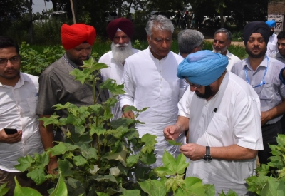 Spurious insecticides suppliers to face strict action: Amarinder