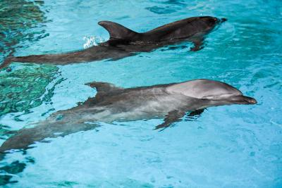 Whales, dolphins have rich  human-like  cultures: Study
