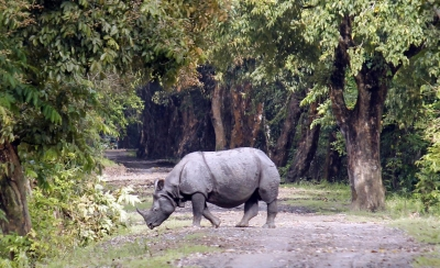 Assam s Pabitora sanctuary records 102 one-horned rhinos