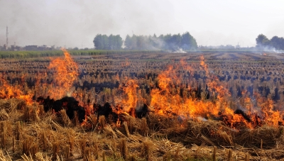 45 per cent drop in stubble burning in Punjab