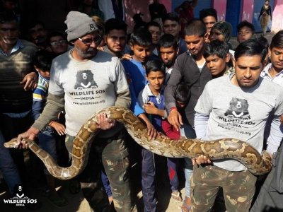 Python creates panic in Agra village