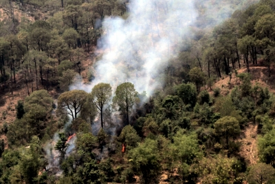 Fires leading cause of forest degradation in India: Report