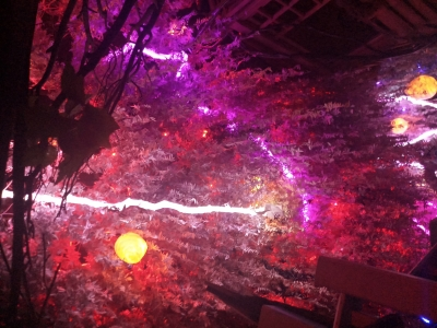 In New Mexico, take a trip into the unknown at the Meow Wolf: The House of Eternal Return (Travelogue)