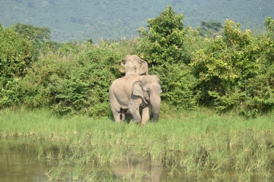Human-elephant conflict taking heavy toll in Chhattisgarh