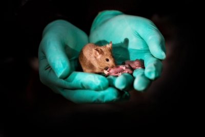 Mouse pups born with 2 mothers, no father using stem cells, gene editing tech