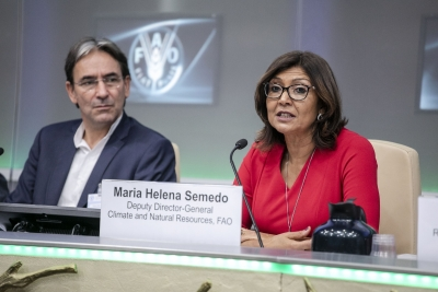 FAO urges nations across world to support agroforestry