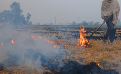 Punjab govt urges farmers to shun stubble burning
