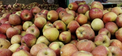 High attendance in govt offices in Kashmir, apple sales up