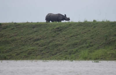 Nepal national park uses app for rhino conservation