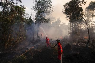 Indonesia probes firms over fires on Sumatra, Borneo