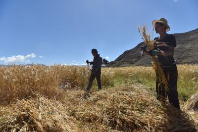 FAO sees record global cereal output in 2019
