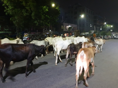 Cattle population increased by 18% in the country: Report