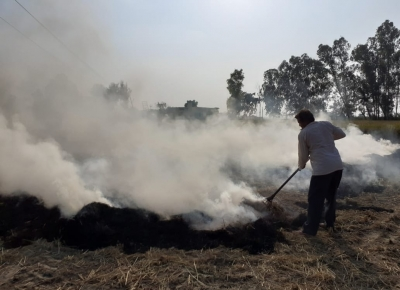 Haryana increasing maize area to reduce stubble burning