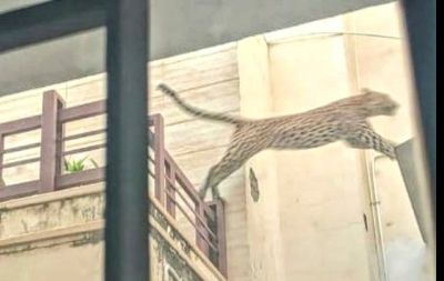 Frantic search for panther as panic spreads in Jaipur