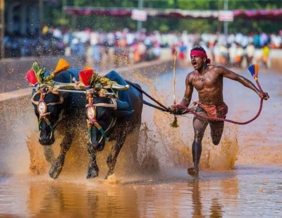 Jolt for Indian Bolt from another Kambala jockey