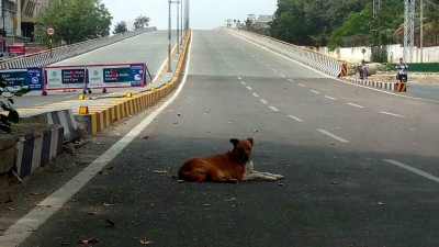 NHAI constructs 3,979 km of NHs, highest ever in a fiscal