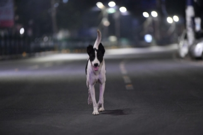 Stray dog's death triggers row between residents, police