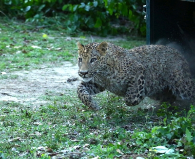 Leopard attacks six in UP