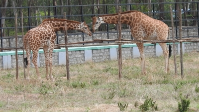 B'luru Zoo to reopen from Monday with limited visitors