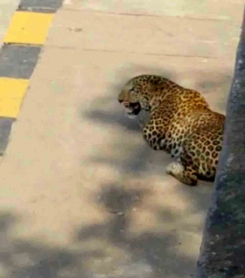Leopard attacks Telangana forest officials