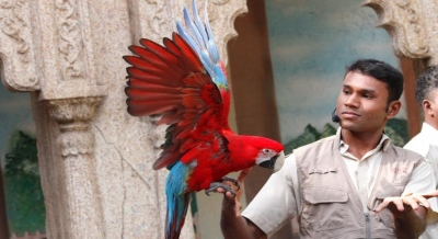 Meet exotic birds in live session series