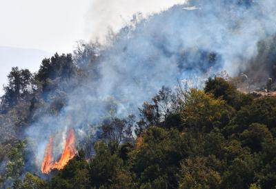 Climate change increases frequency of wildfires globally: Study