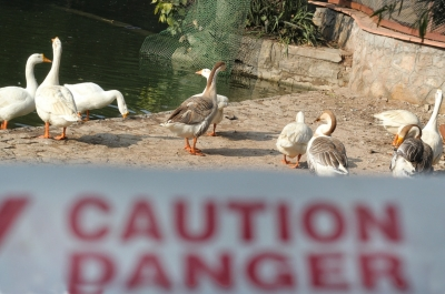 Avian influenza in poultry birds confirmed in 5 states: Govt