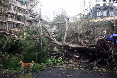 Cyclone Tauktae brings record May rains, leaves trail of destruction in Maha (Lead)