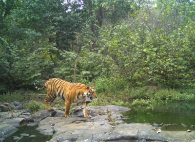 'India for Tigers' rally from October 2